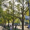 Photos: TON08286横浜マラソン2019