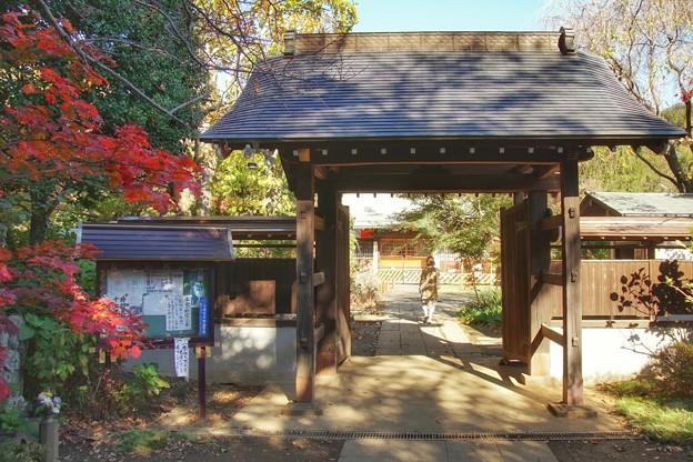 TON08461紅葉(興禅院)
