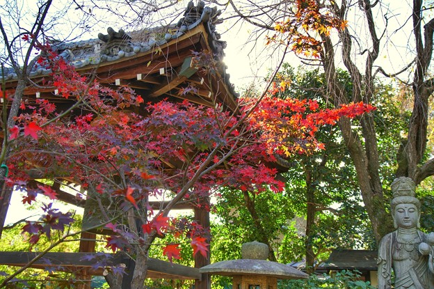 TON08464紅葉(興禅院)