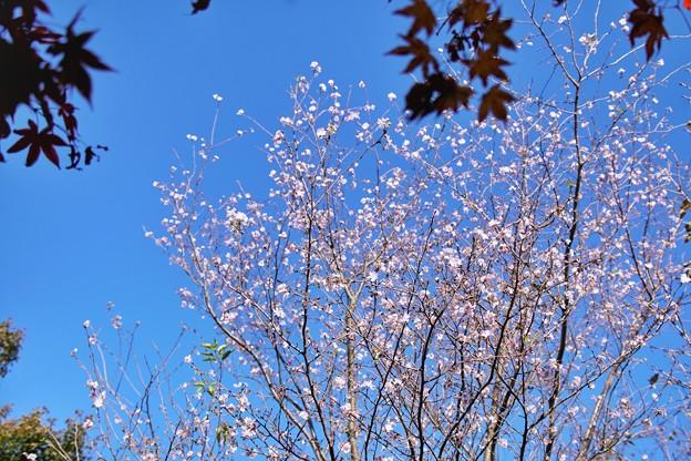 TON08468紅葉(興禅院)