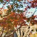TON08472紅葉(興禅院)
