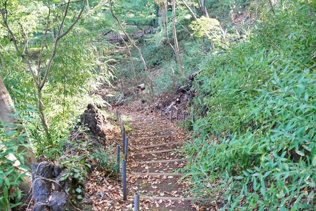 TON08476紅葉(興禅院)