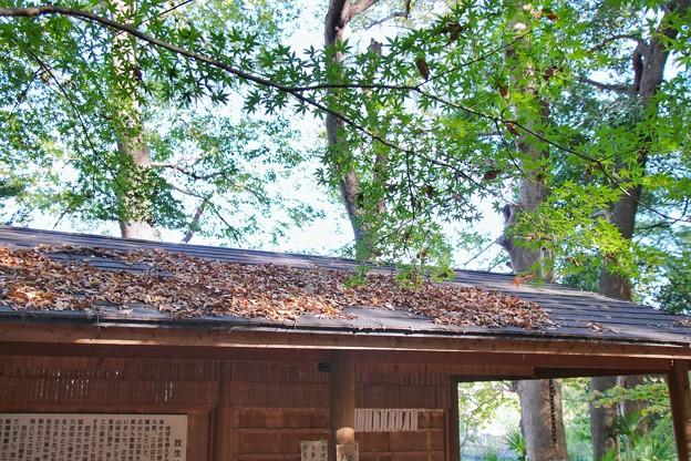TON08479紅葉(興禅院)