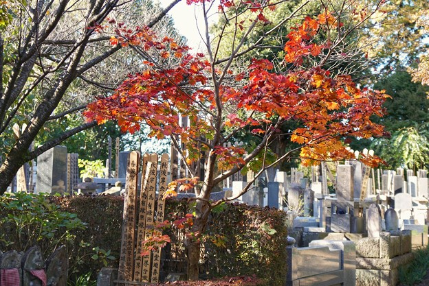TON08489紅葉(興禅院)