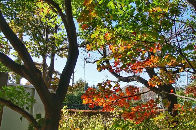 TON08491紅葉(興禅院)