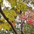 TON08529成田山紅葉狩りR1