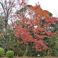 TON08539成田山紅葉狩りR1
