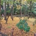 TON08568成田山紅葉狩りR1