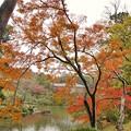 TON08576成田山紅葉狩りR1