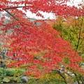 TON08577成田山紅葉狩りR1