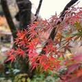 TON08584成田山紅葉狩りR1