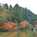 TON08589成田山紅葉狩りR1