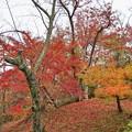 TON08606成田山紅葉狩りR1