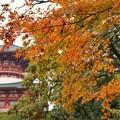 TON08654成田山紅葉狩りR1