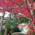 TON09405神代植物・深大寺紅葉R1