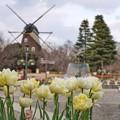 TON09933船橋アンデルセン公園
