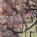 Photos: TOM00165郷土の森(早咲)
