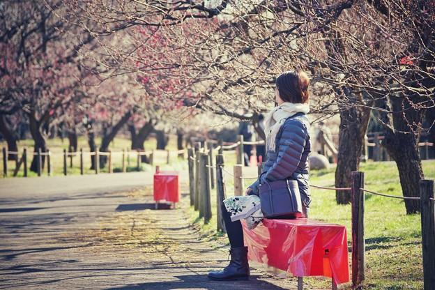 満開の梅林を待って…(郷土の森@早咲)