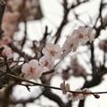 Photos: SAL18250試し撮り1