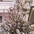 Photos: SAL18250試し撮り8