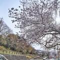 TOM00879津久井湖城山公園