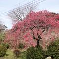 Photos: TOM00883津久井湖城山公園