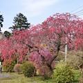 Photos: TOM00884津久井湖城山公園