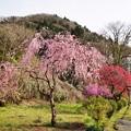 Photos: TOM00888津久井湖城山公園