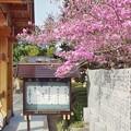 Photos: TOM00892津久井湖城山公園