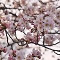 Photos: TOM00896津久井湖城山公園