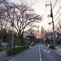 Photos: 深大寺(桜)_0188