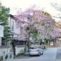 Photos: 深大寺(桜)_0196