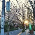 Photos: 深大寺(桜)_0197
