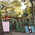 Photos: 井の頭公園(桜)_0207