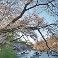 井の頭公園(桜)_0209