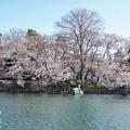 井の頭公園(桜)_0221