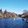 井の頭公園(桜)_0227