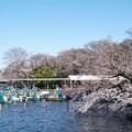 Photos: 井の頭公園(桜)_0228