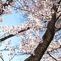 Photos: 井の頭公園(桜)_0230