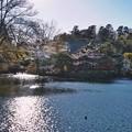 Photos: 井の頭公園(桜)_0233