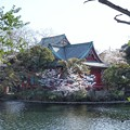 Photos: 井の頭公園(桜)_0235