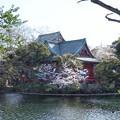 井の頭公園(桜)_0235