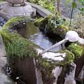 井の頭公園(桜)_0237