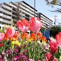 Photos: チューリップの咲く公園_0503