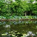 花菜ガーデン【紫陽花】_1891