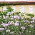 Photos: 花菜ガーデン【紫陽花】_1893