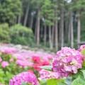 紫陽花屋敷_1925