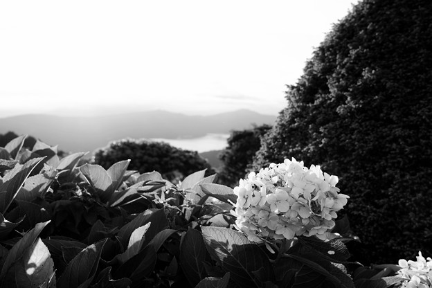 Photos: 16F14DCDN試し撮り_2484