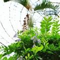 Photos: 花菜ガーデン(16F14)_2549