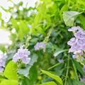 Photos: 花菜ガーデン(16F14)_2550
